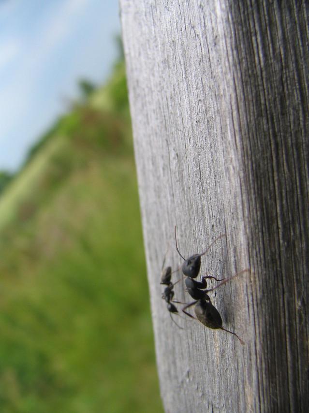 fourmi marseille désinsectisation adh nuisibles