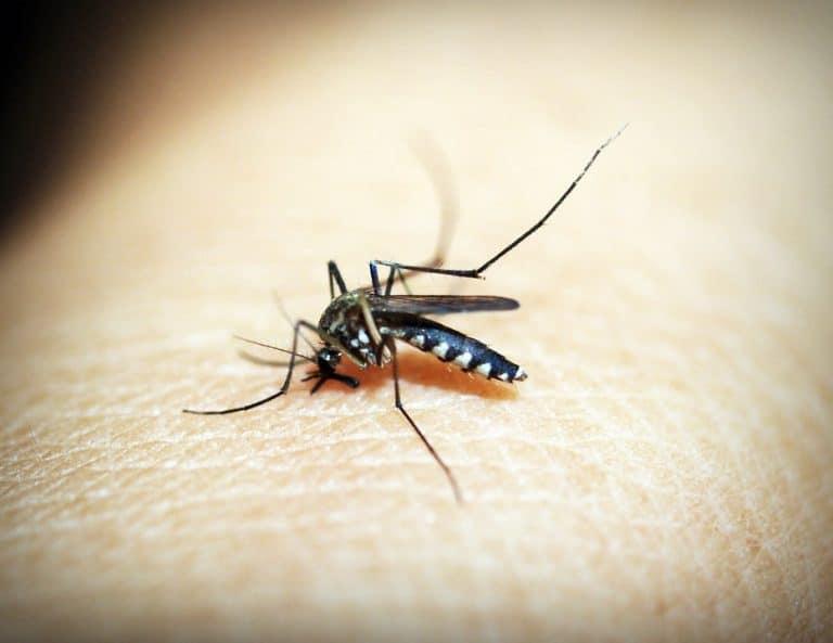 moustique désinsectisation marseille